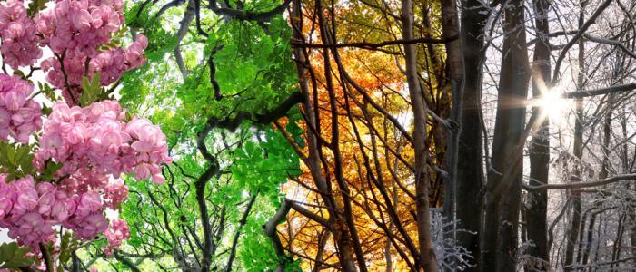 4 seizoenen in de natuur